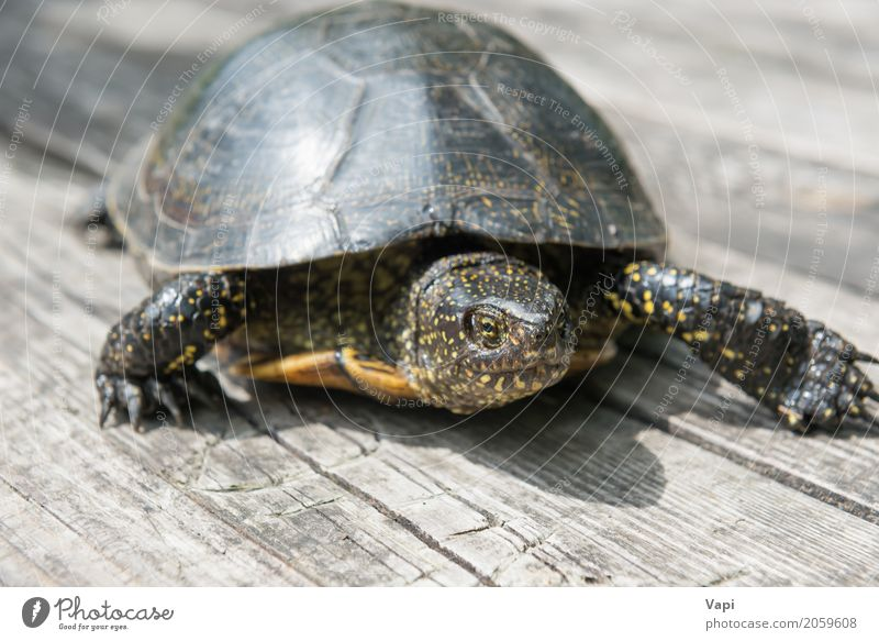 Big turtle on old wooden desk Exotic Summer Sun Garden Desk Table Environment Nature Animal Sunlight Pet Wild animal 1 Wood Old Crawl Small Natural Cute Brown