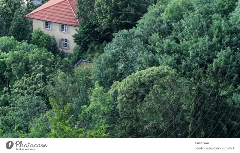 treecastle Vacation & Travel Trip Summer Environment Nature Landscape Tree Forest Freiburg im Breisgau Outskirts House (Residential Structure) Detached house