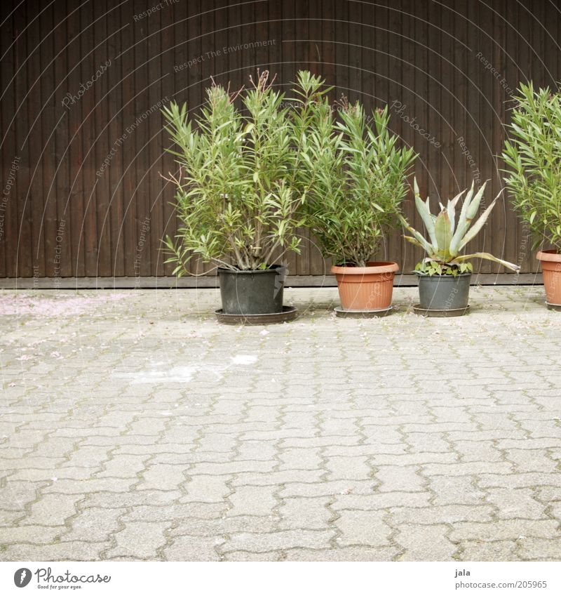 Green Plant Wood Gray Stone Brown Places Bushes Paving stone Pot plant Aloe Wooden facade