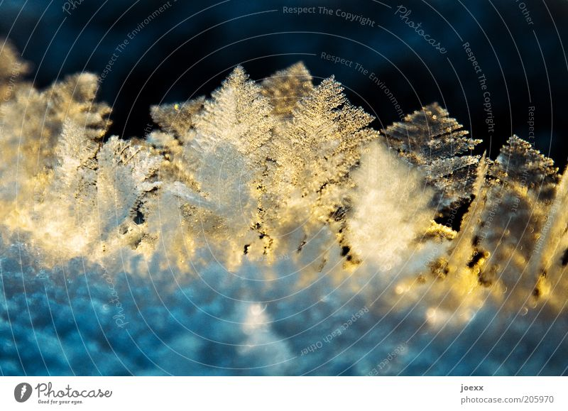 small refreshment Winter Ice Frost Cold Yellow Ice crystal ice forest Colour photo Multicoloured Exterior shot Macro (Extreme close-up) Day Sunlight Deserted