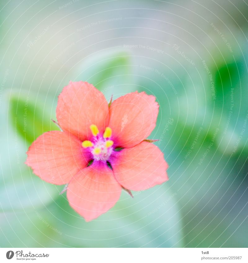 Nature Flower Plant Blossom Small Environment Delicate Pollen Blossom leave Macro (Extreme close-up) Pistil