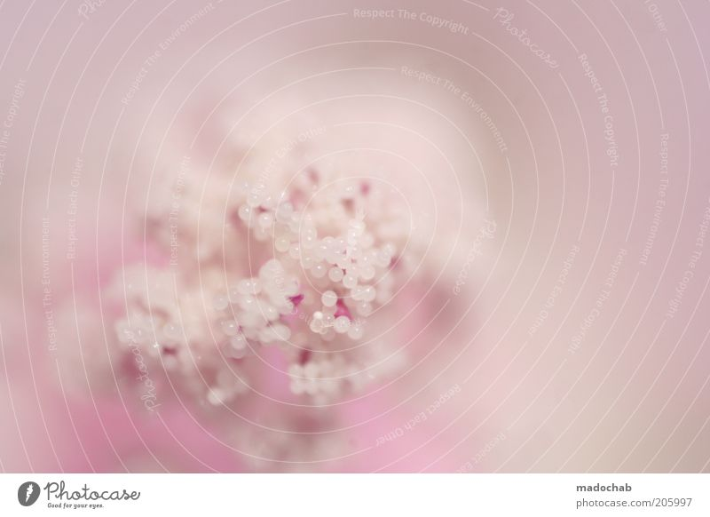 White Beautiful Plant Summer Flower Calm Life Blossom Spring Style Pink Esthetic Delicate Fragrance Harmonious Abstract
