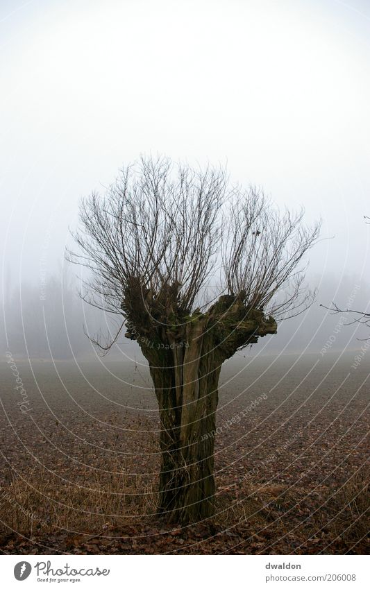 Tree in the Fog Environment Nature Landscape Plant Autumn Bad weather Field Emotions Moody Power Calm Loneliness Twig Twigs and branches Colour photo