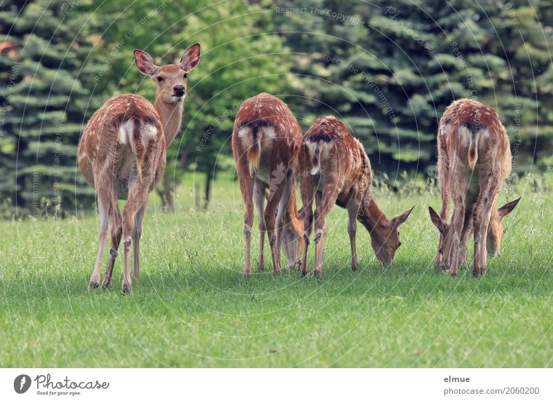 Nature Calm Forest Environment Meadow Natural Freedom Brown Contentment Stand Joie de vivre (Vitality) Group of animals Observe Protection Curiosity Vension