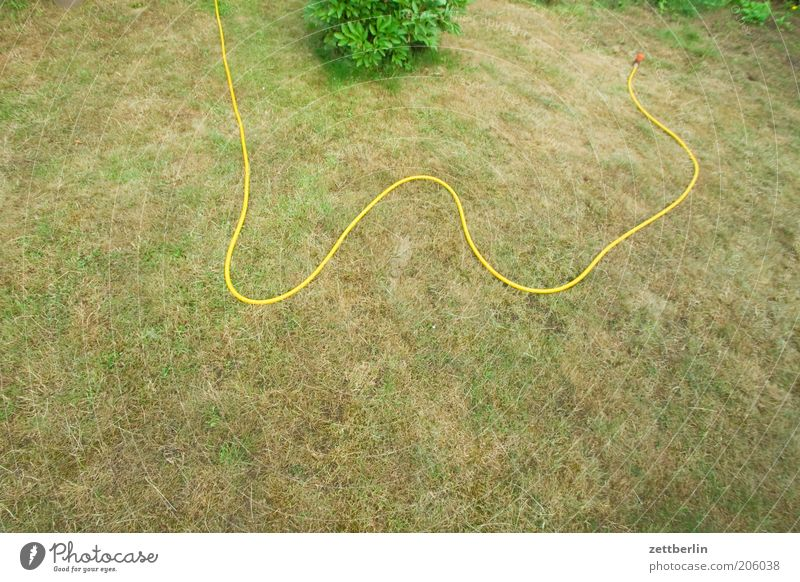 Water Yellow Meadow Grass Garden Park Line Lawn Dry Cast Hose Drought Shriveled Gardening Lacking Water hose