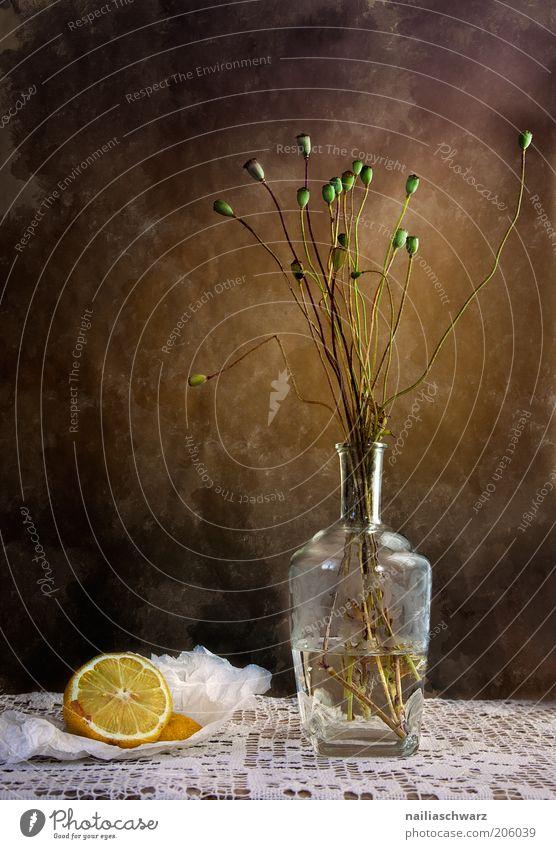 still lifes Food Lemon Citrus fruits Flat (apartment) Decoration Vase Art Work of art Plant Flower Poppy capsule Poppy blossom Stone Glass Water Esthetic Warmth