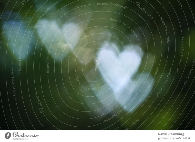 I love mother nature Green White Love Heart Heart-shaped Light Sign Symbols and metaphors Phenomenon Emotions Colour photo Exterior shot Shadow Contrast