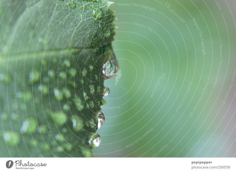 Green Summer Leaf Drops of water Wet Fresh Damp Dew Rachis Water Moistened Leaf green Wild plant Hydrophobic