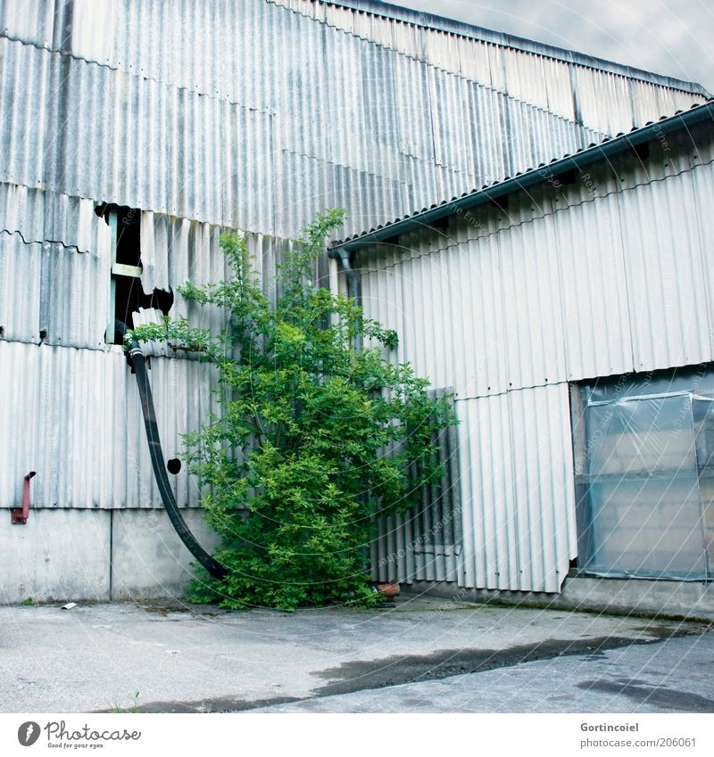 Nature vs. Man Industry Plant Bushes Foliage plant Industrial plant Factory Building Facade Old Green Derelict Hose Corrugated sheet iron Corrugated-iron hut