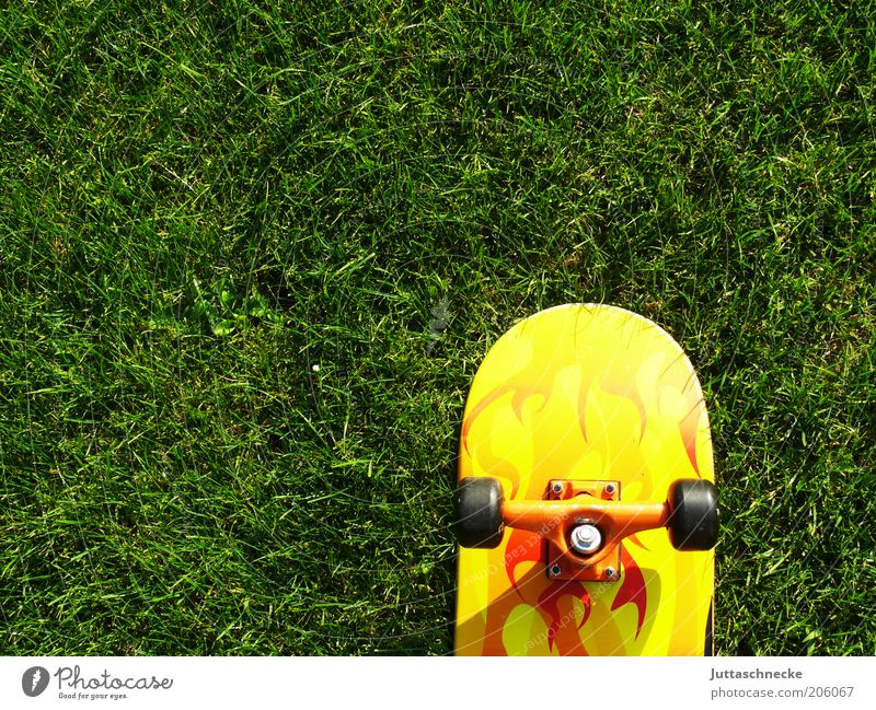 Board on Green Summer Sports Skateboard Youth culture Garden Meadow Yellow Stagnating Wheel Ball bearing Skateboarding Colour photo Exterior shot Deserted
