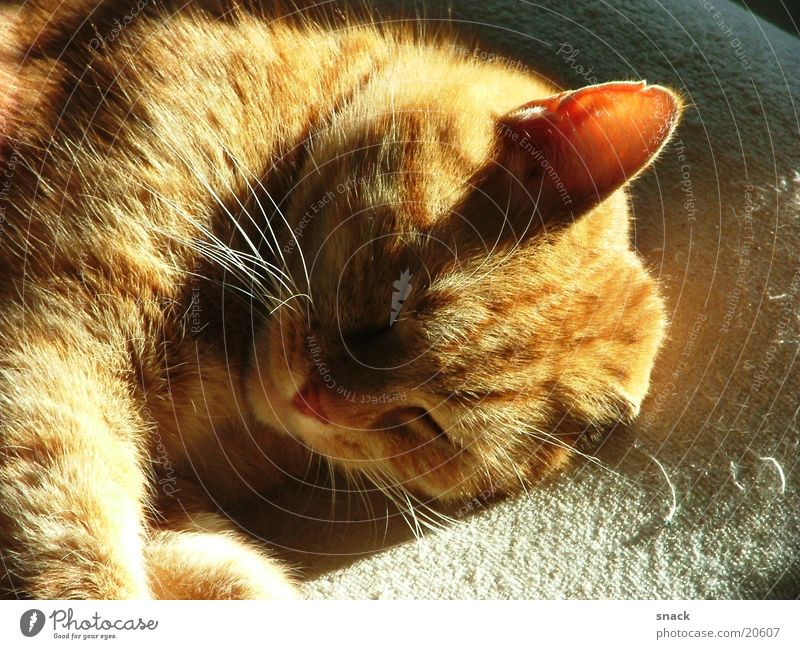 Sun Relaxation Dream Sleep Cat Domestic cat