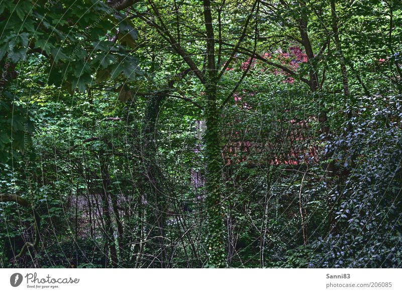 Green Hell Nature Summer Plant Tree Bushes Ivy Foliage plant Garden Park Forest Outskirts Hut Ruin Old Free Natural Beautiful Wild Brown Emotions Colour photo