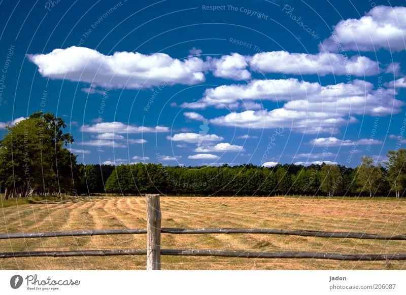 Nature Sky Blue Summer Clouds Yellow Meadow Grass Hot Idyll Fragrance Dry Pasture Fence Beautiful weather Hay