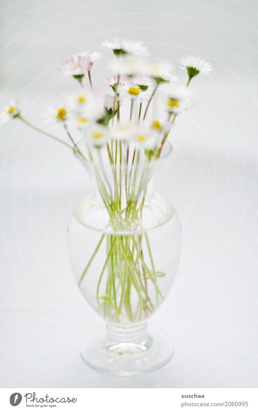daisies Flower Daisy Bouquet Vase Stalk Blossom Spring Glass Water Bright