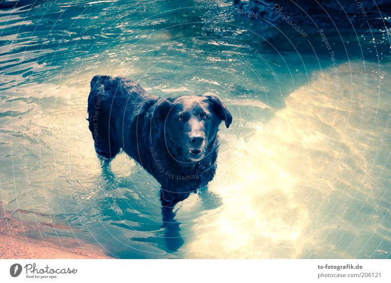 Nature Water Blue Summer Joy Animal Cold Relaxation Dog Warmth Weather Wet Swimming pool Swimming & Bathing Joie de vivre (Vitality)