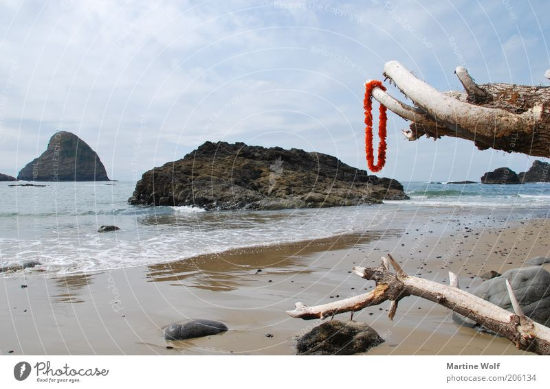 Oregon Coast Vacation & Travel Trip Freedom Summer Beach Ocean Nature Pacific Ocean USA North America Far-off places Wood Tree trunk Tree stump Necklace Red