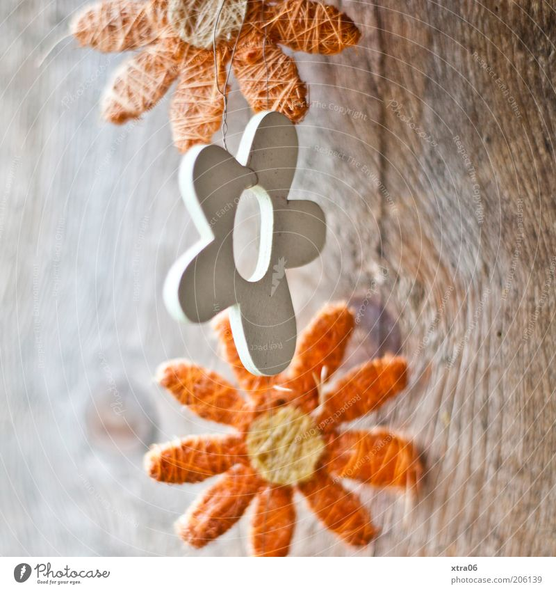 good morning flowers Wood Natural Decoration Flower Orange Paper chain Colour photo Exterior shot Close-up Sunlight Blossom Nature Natural color Wooden board