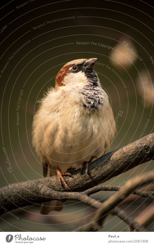 flight readiness Zoo Nature Animal Wild animal Bird Wing Sparrow 1 Wait Esthetic Fat Calm Elegant Colour photo Exterior shot Deserted Day Central perspective