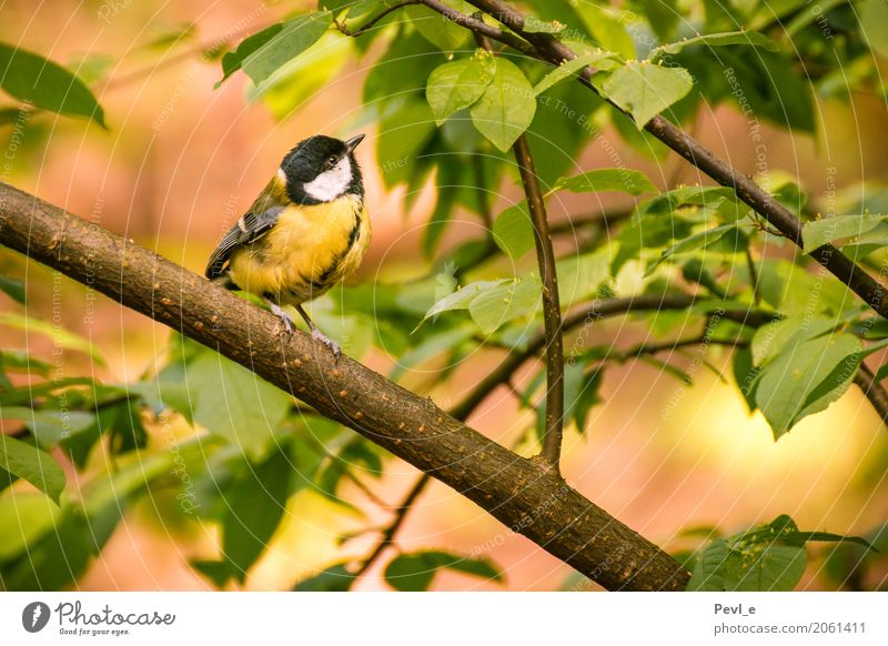 Song of Peace Environment Nature Plant Animal Spring Beautiful weather Tree Leaf Forest Bird Wing 1 Relaxation Dream Happy Natural Positive Emotions Moody