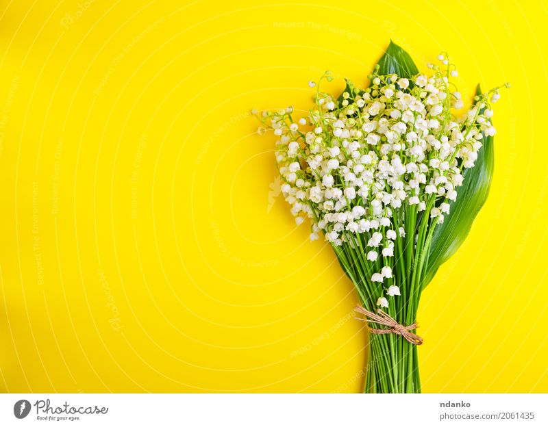 Bouquet of white lilies of the valley Beautiful Decoration Feasts & Celebrations Valentine's Day Plant Flower Leaf Blossom Blossoming Bright Small Yellow Green