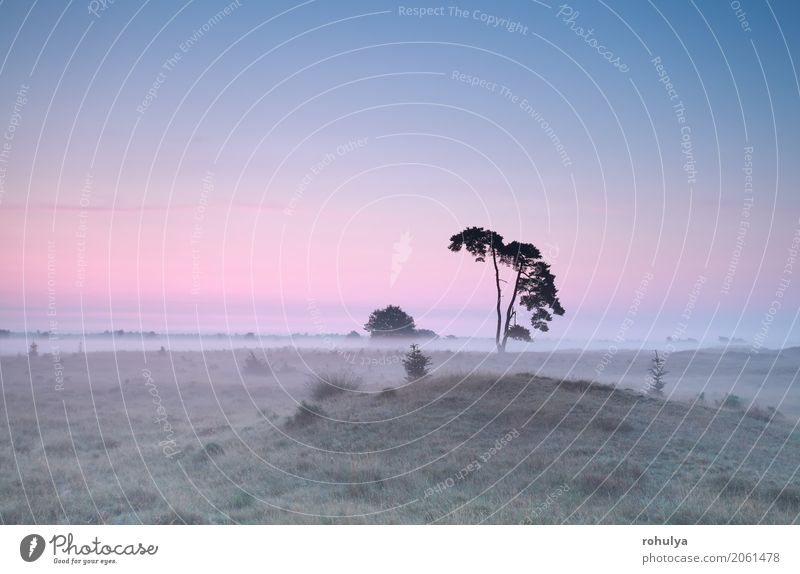 calm misty sunrise over meadow with pine tree Nature Landscape Sky Sunrise Sunset Summer Beautiful weather Fog Tree Meadow Hill Pink Serene Pine coniferous
