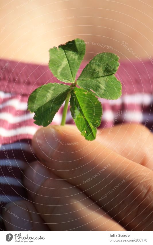 you can give luck away Human being Feminine Skin Fingers 1 Summer Beautiful weather Grass Leaf Foliage plant T-shirt Happiness Happy Green Violet White