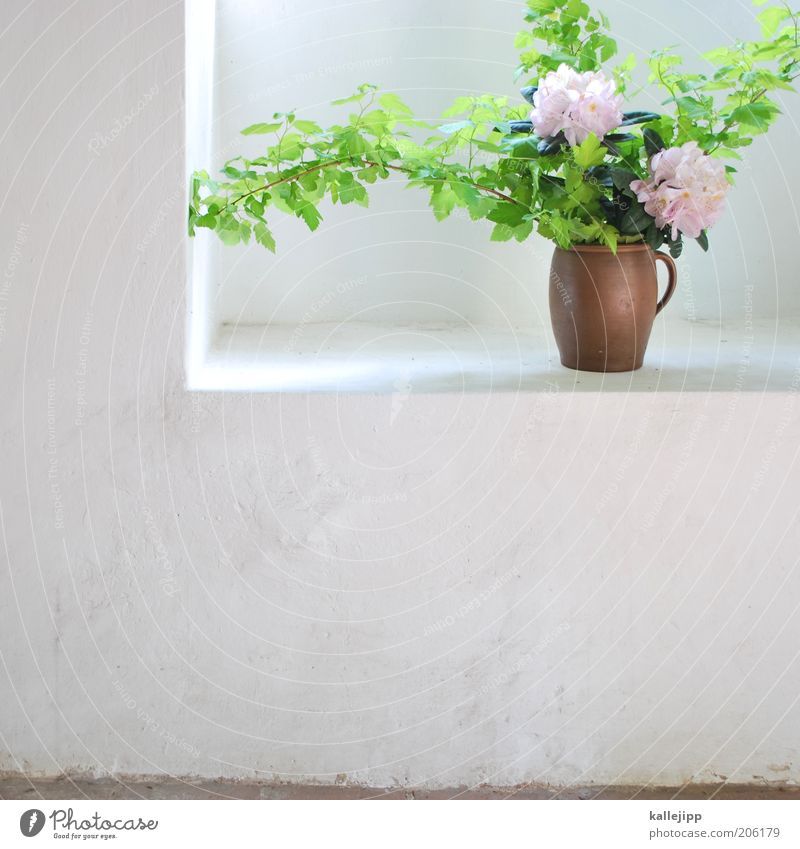 Beautiful Summer Flower Style Spring Bright Room Elegant Natural Fresh Decoration Corner Clean Blossoming Flowerpot Sustainability