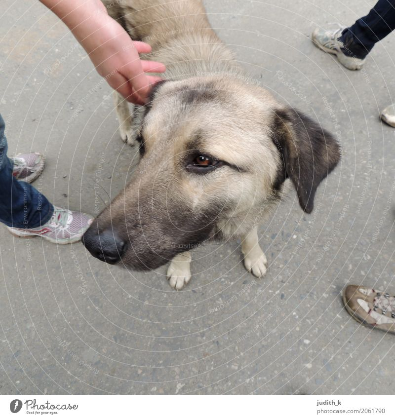 hello dog 01 Human being Feet Group Footwear Animal Pet Dog Pelt Petting zoo Touch To enjoy Love Looking Playing Happy Cuddly Curiosity Cute Under Contentment