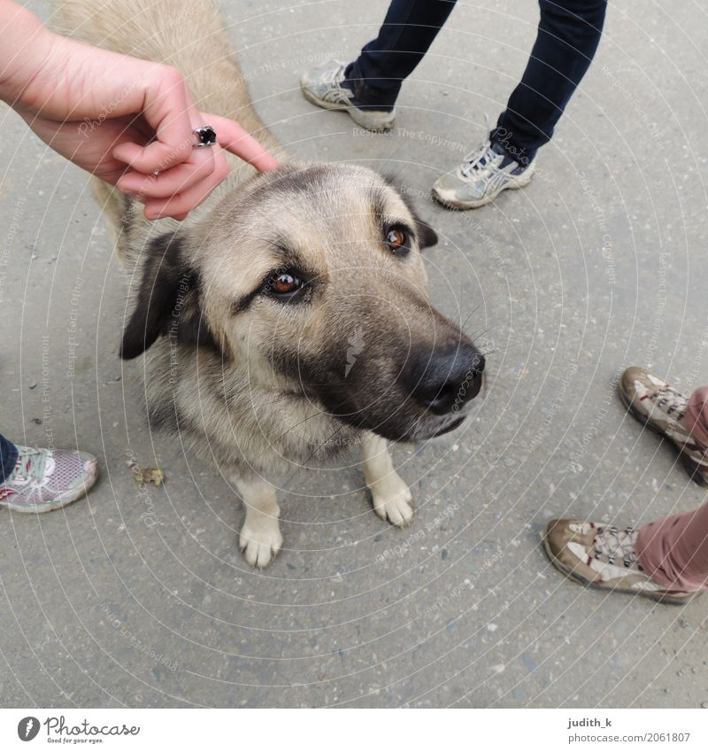 hello dog 03 Human being Hand Feet Group Footwear Animal Pet Dog Pelt Petting zoo 1 Touch To enjoy Love Looking Playing Happy Cuddly Curiosity Cute Under