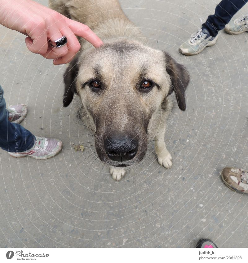 hello dog 02 Human being Hand Feet Group Footwear Animal Pet Dog Pelt Petting zoo 1 Touch To enjoy Love Looking Playing Brash Happy Cuddly Curiosity Cute Under