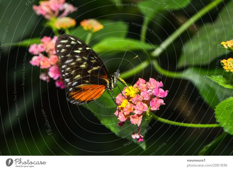 lightness Nature Plant Animal Flower Leaf Blossom Wild animal Butterfly Wing Zoo 1 To feed Hang To swing Sit Drinking Exotic Natural Brown Multicoloured Yellow