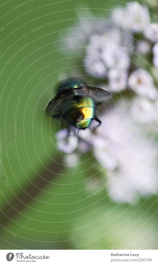 Nature Flower Green Plant Summer Animal Blossom Movement Spring Air Glittering Small Pink Fly Flying Gold