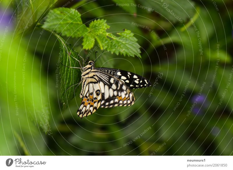 flutter man Animal Wild animal Butterfly 1 Hang Illuminate Sit Wait Esthetic Natural Cute Brown Green Black White Feeler Exotic Judder Wing Colour photo