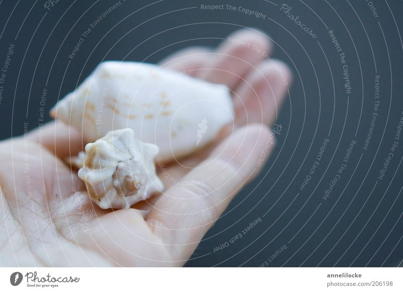 clam search Vacation & Travel Summer Summer vacation Hand Fingers Environment Nature Mussel Snail shell 2 Animal Beautiful Blue White Wanderlust Collection