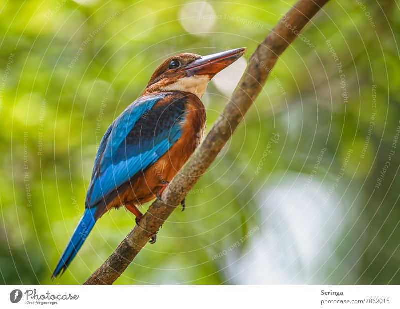 Looking up Coast Lakeside River bank Ocean Animal Wild animal Bird Animal face Wing Claw 1 Flying Kingfisher Multicoloured Blue Kingfisher Brown Kingfisher