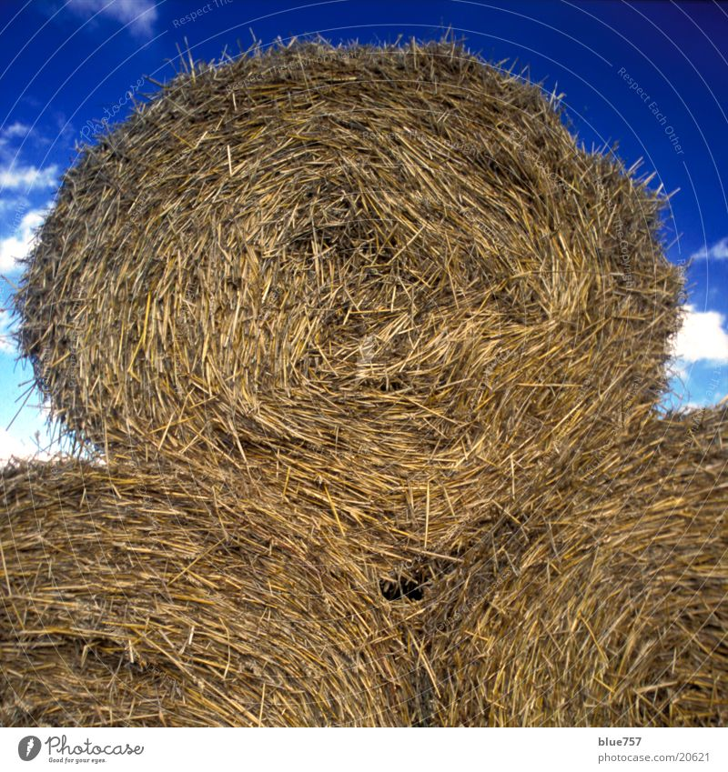 Sky White Blue Clouds Yellow Autumn Gold To fall Things Bale of straw