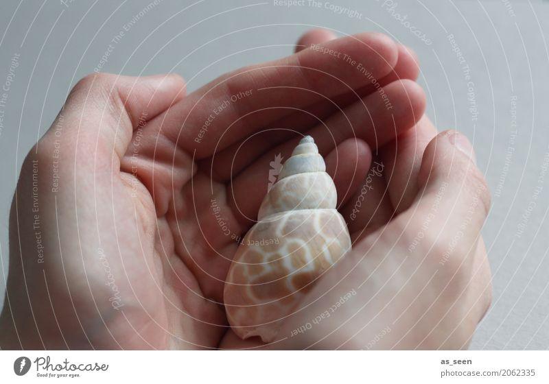 attentiveness Design Exotic Healthy Health care Alternative medicine Wellness Life Harmonious Well-being Senses Relaxation Calm Meditation Ocean Hand Fingers