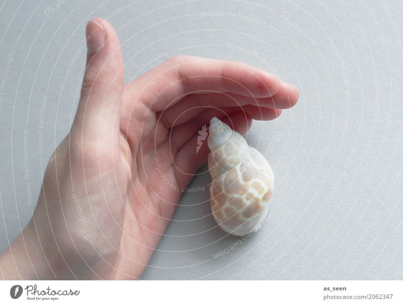 Protect Wellness Harmonious Calm Meditation Hand Fingers Environment Nature Snail Mussel Snail shell Touch To hold on Maritime Round Point Brown Gray White
