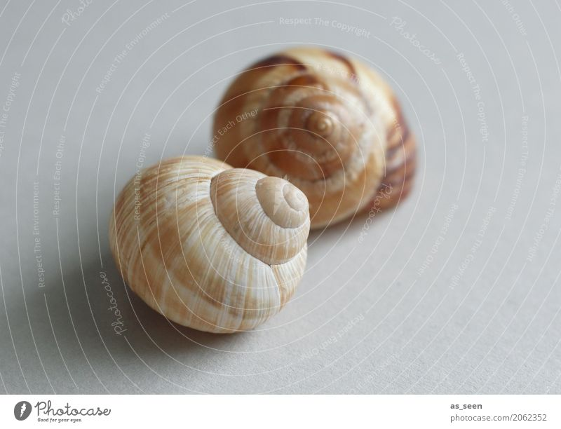 snail shells Style Design Exotic Healthy Wellness Harmonious Senses Calm Meditation Environment Nature Animal Mussel Snail Snail shell 2 Touch Lie Round Brown