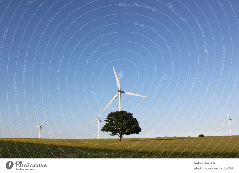 Photosynthesis3.0 Energy industry Renewable energy Wind energy plant Wheatfield Field Schleswig-Holstein Good Environmental protection Blue Sky Tree Agriculture