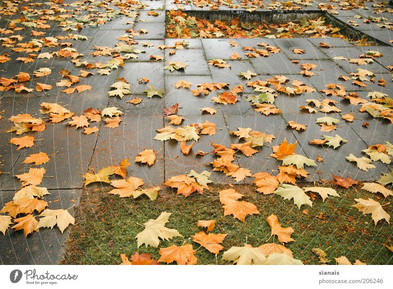 Nature Leaf Life Cold Autumn Sadness Rain Weather Environment Wet Concrete Earth Gloomy Change Switzerland Transience