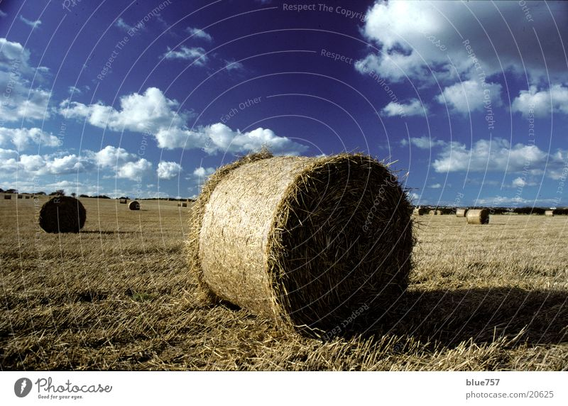 Sky Blue Clouds Yellow Field Round Harvest Straw Great Britain Bale of straw