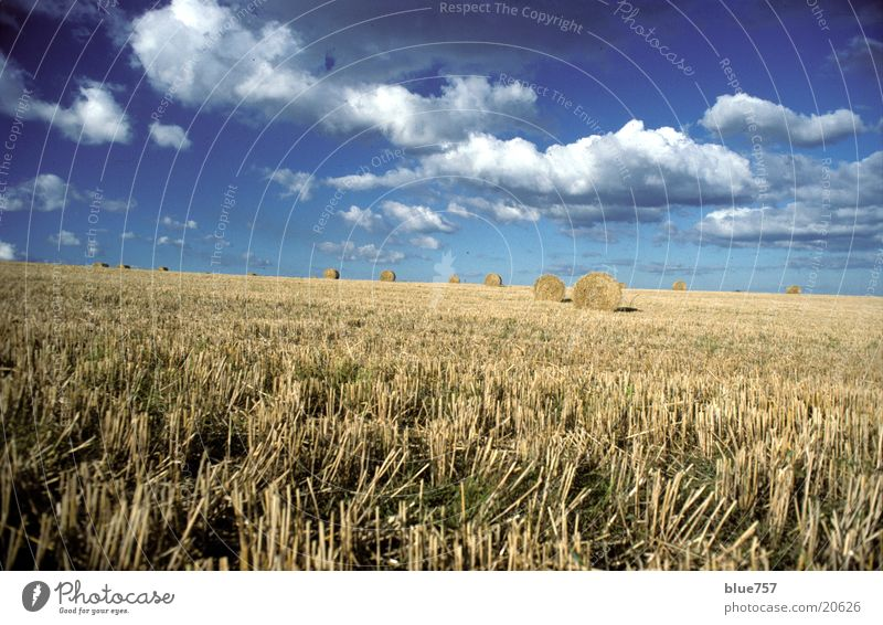 Sky Blue Clouds Yellow Field Round Straw Bale of straw
