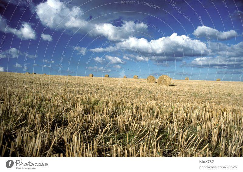 Sky Blue Clouds Yellow Field Round Straw Bale of straw