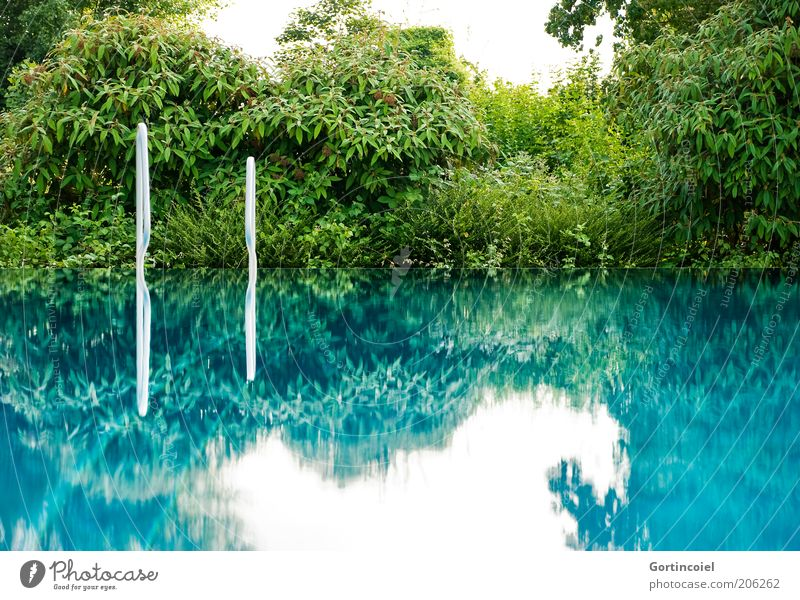 surface tension Summer Summer vacation Sky Blue Green Swimming pool Open-air swimming pool Ladder Bushes Surface of water Water Smoothness Calm Turquoise
