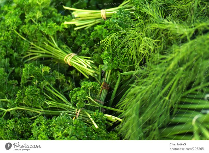 Green Plant Nutrition Food Fresh Growth Herbs and spices Markets Organic produce Juicy Bundle Foliage plant Healthy Eating Agricultural crop Parsley Part of the plant