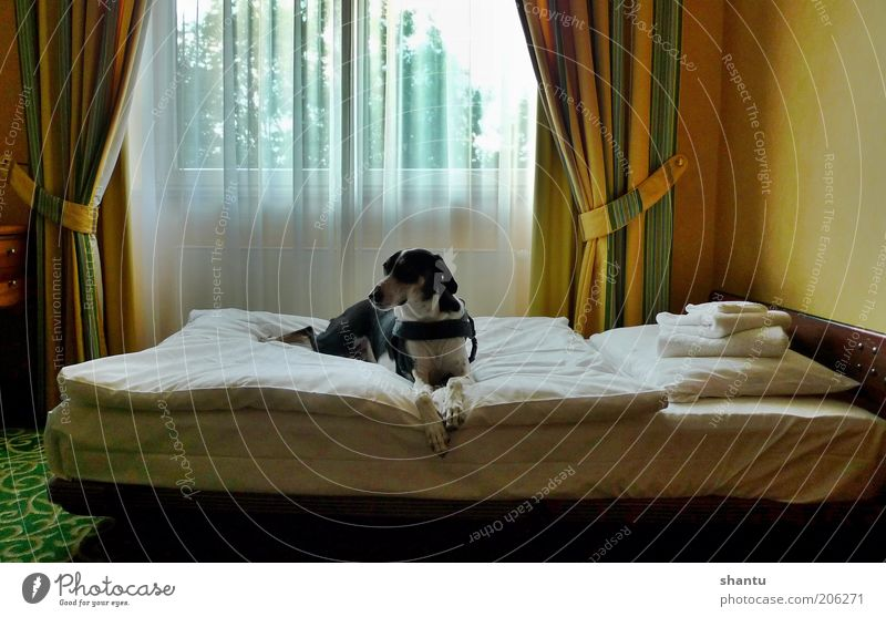 Dog in bed Pet 1 Animal Esthetic Senses Style Colour photo Multicoloured Interior shot Deserted Copy Space top Morning Shadow Central perspective