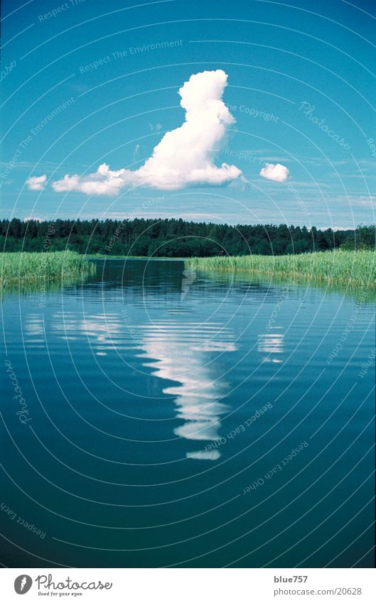 Water White Green Blue Calm Clouds Forest Common Reed Calm