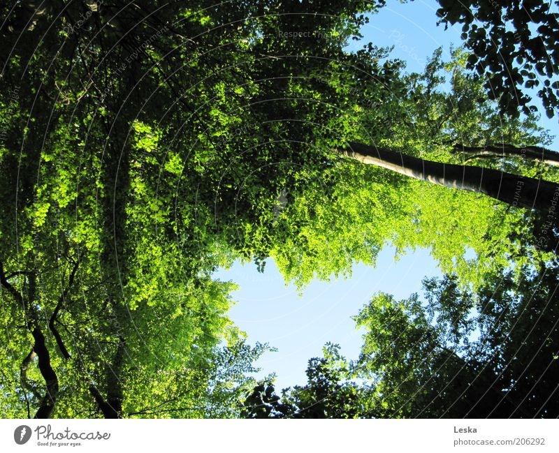 Nature Sky Tree Green Blue Plant Summer Calm Leaf Forest Above Air Moody Power Growth Protection
