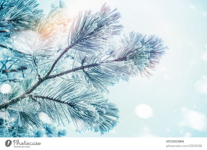 Christmas tree on winter day Lifestyle Winter Garden Christmas & Advent Nature Beautiful weather Plant Tree Park Soft Frost Winter vacation Snow Fir branch